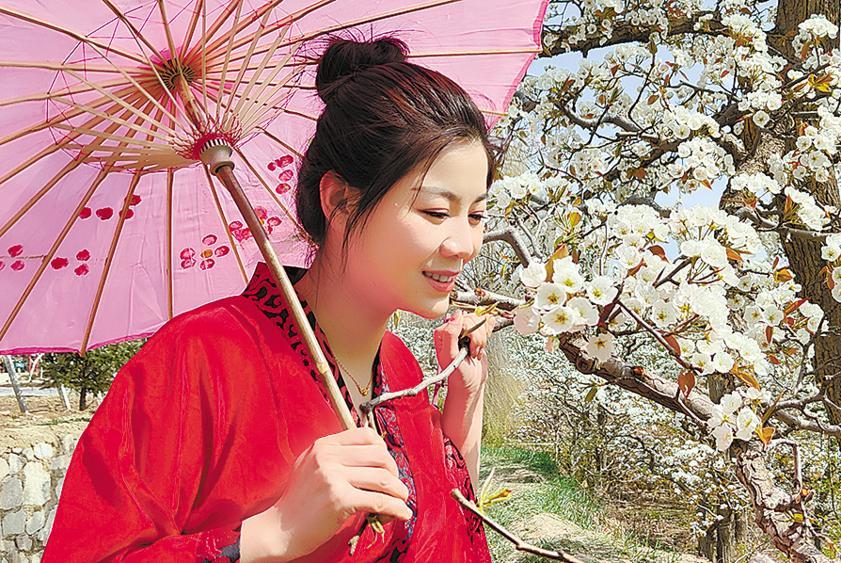 万树梨花中蕴含的为民情