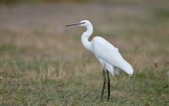 贵南茫曲国家湿地公园成为鸟的天堂