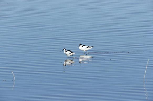 青海可鲁克湖—托素湖省级自然保护区开展鸟类监测工作