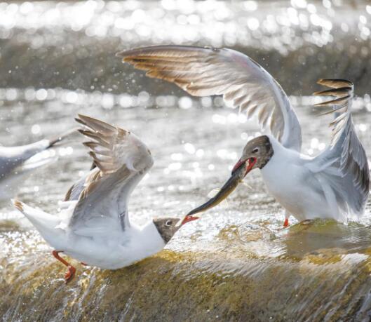 三江源:高原野生动物的乐园