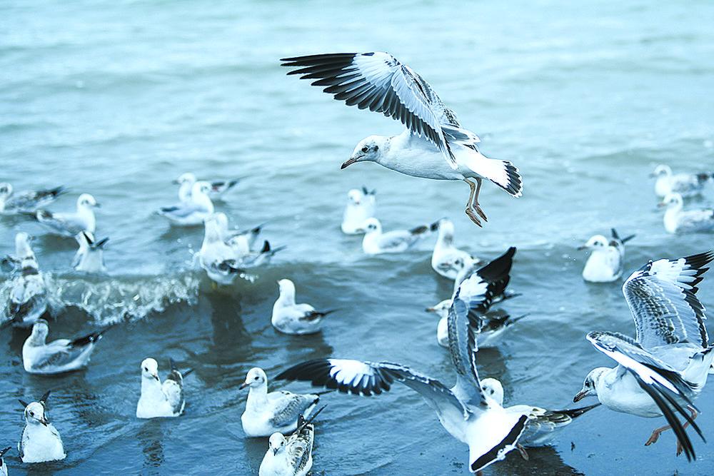 三江源,人与自然和谐共生的乐园